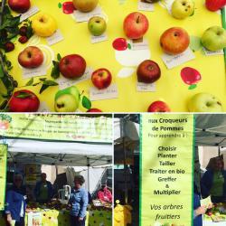 Croqueurs de pomme - Semaine du goût